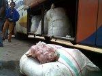 Sebanyak 1,5 ton dagaing celang dari Jambi ketika akan di bawa ke Jakarta dengan menggunakan bis Laju prima antar kota antar provinsi (AKAP), ketika di amankan oleh petugas Polhut Banten di rest area Bogeg Cipocok Jaya Kota Serang Banten.